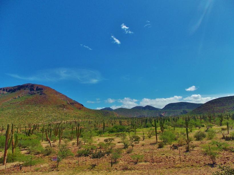 Bajan Landscape 1 #hoptgf