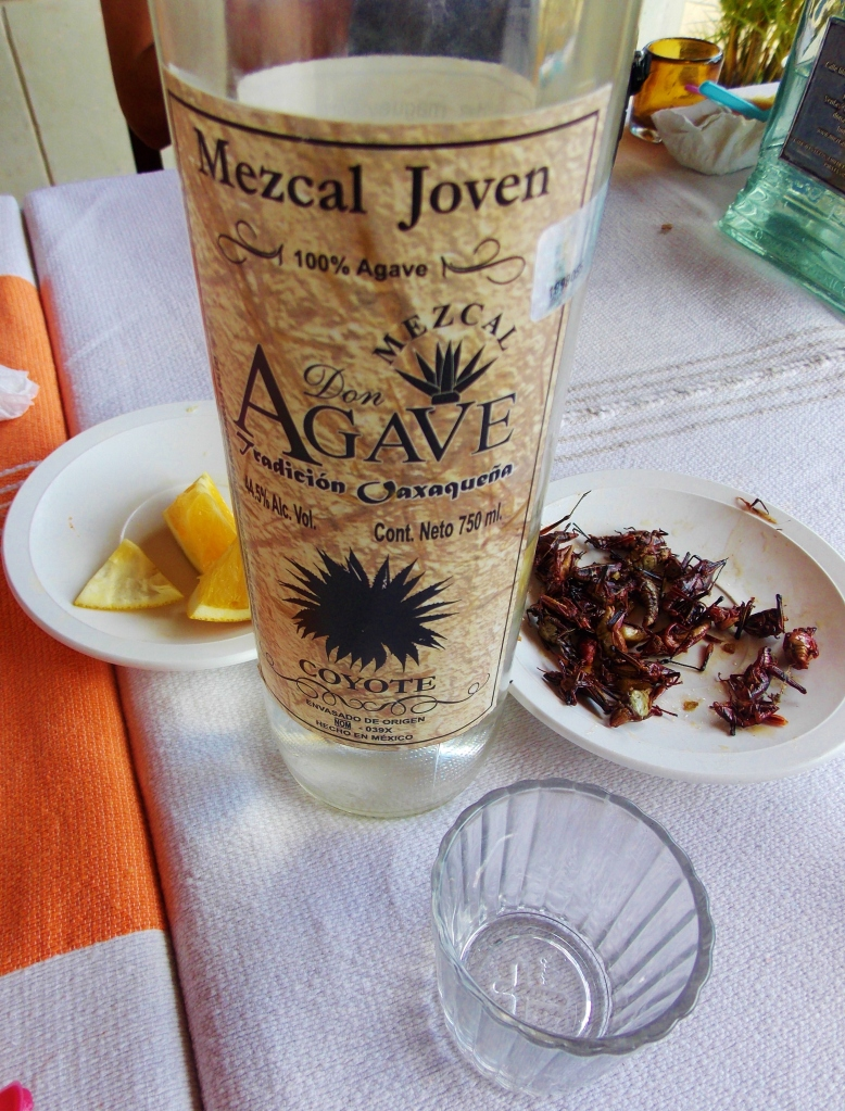 Mezcal and Chapulines with some Colombians at the Don Agave factory