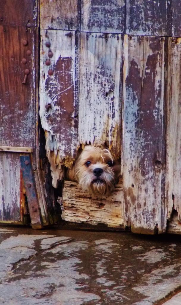 Camoflage dog