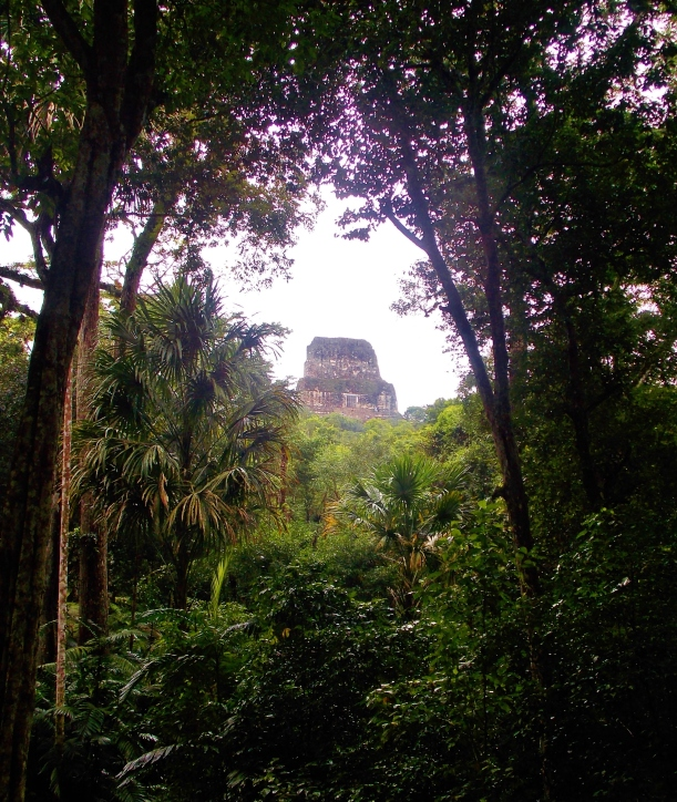 Temple 4 through the jungle