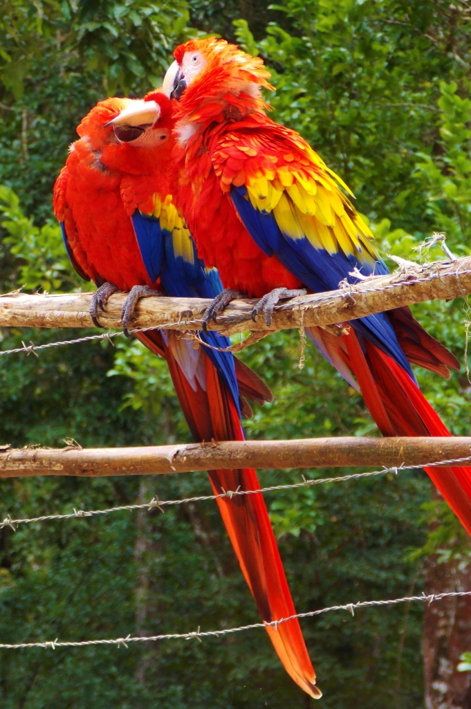 Cheeky Macaws