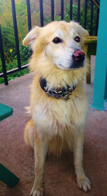 Hostel dog Osso, legend!