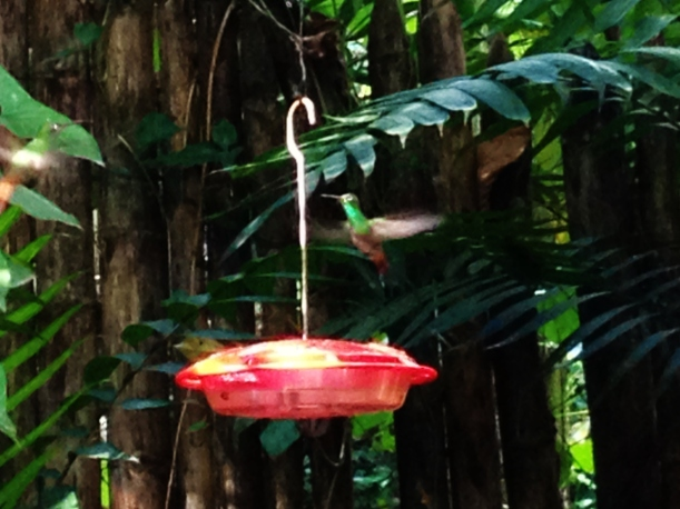You try and take a photo of a humming bird then!