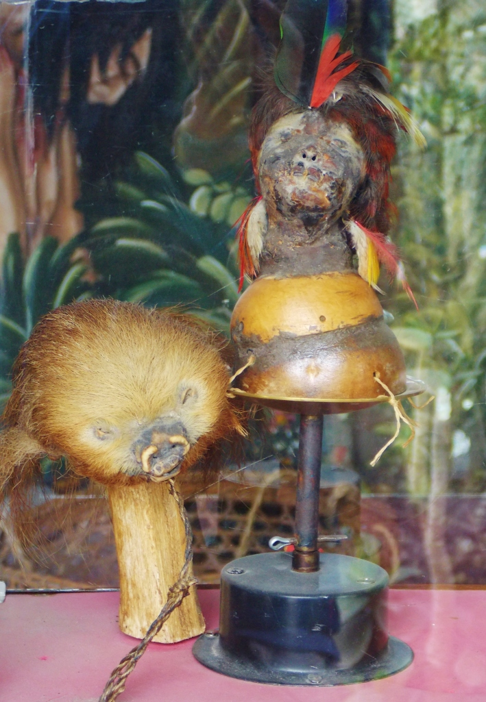 150 year old genuine shrunken human head, next to that of a sloth...for perspective i guess.