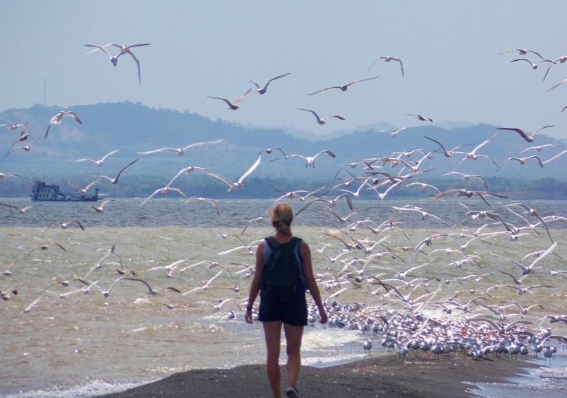 BIRDS! At Punta Jesus Maria