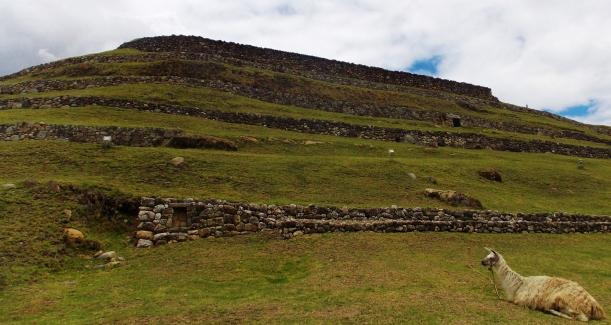 Pumapungo...with llama