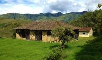 Ollies dream house