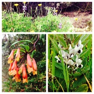 Some of the flowers on the hike in Chugchilan