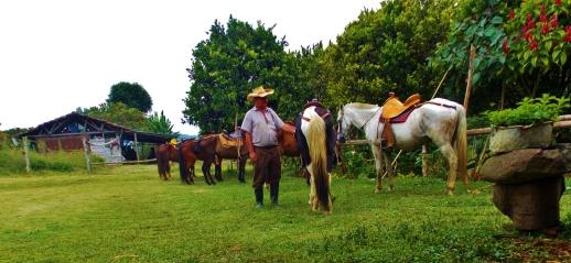 Horse break