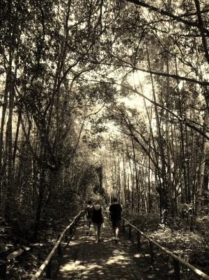 Forest walk through the park of San Agustín