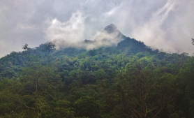 Cloud forest at Cocora