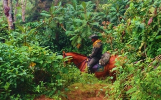 An alarming moment - When three Colombian mounties appear as if from nowhere on giant horses