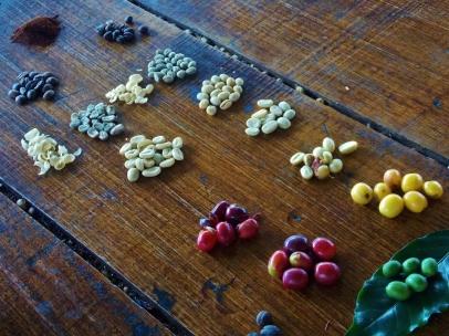 Cherries to Ground