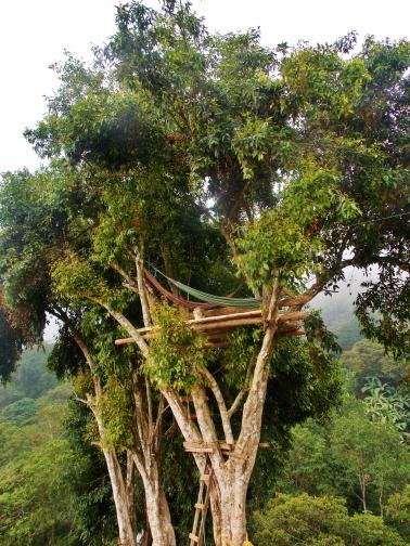 Tree hammocks