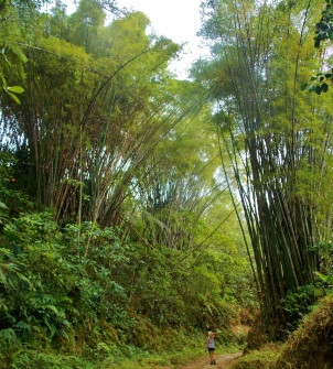 Bamboo everywhere!
