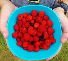 Jungle berries!