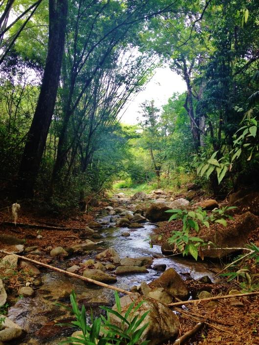 River near Minca