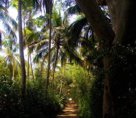 Path to the beach near Rancho