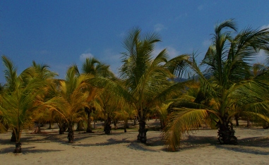 Palms, beach and blue sky...