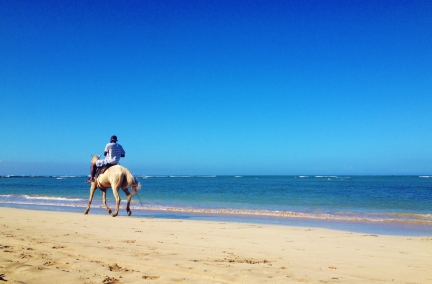 A cheeky horse rider gallops past our spot on 4th beach