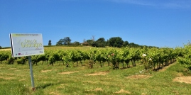 The vinyards through Gers - The area is famous for Floc